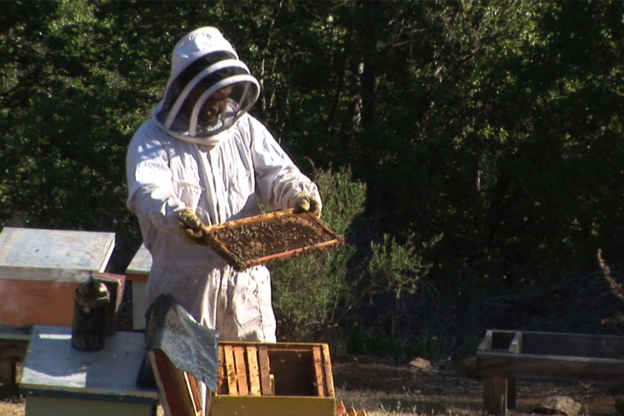 GEF Montaña impulsa la primera cooperativa de apicultores orgánicos de la Región Metropolitana