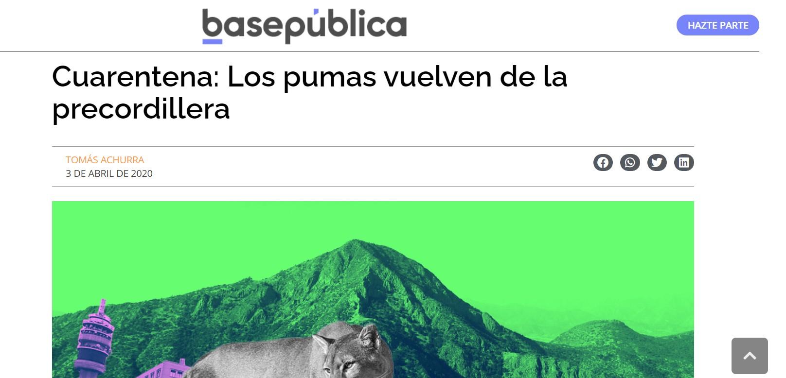 Cuarentena: Los pumas vuelven de la precordillera