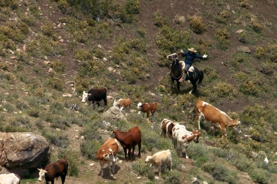 Piloto busca mejorar comercialización del ganado de pequeños crianceros