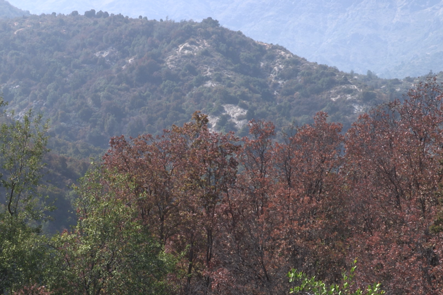 La Ordenación Forestal Sustentable aporta en la mitigación de los efectos de cambio climático y la sequía en la Zona Central