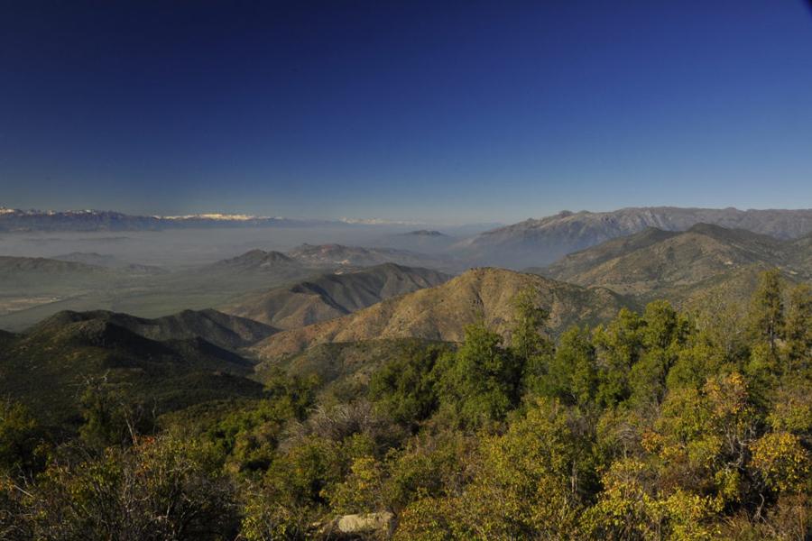 La Ordenación Forestal como instrumento de gestión pública ante la crisis climática y sanitaria que cruza el país