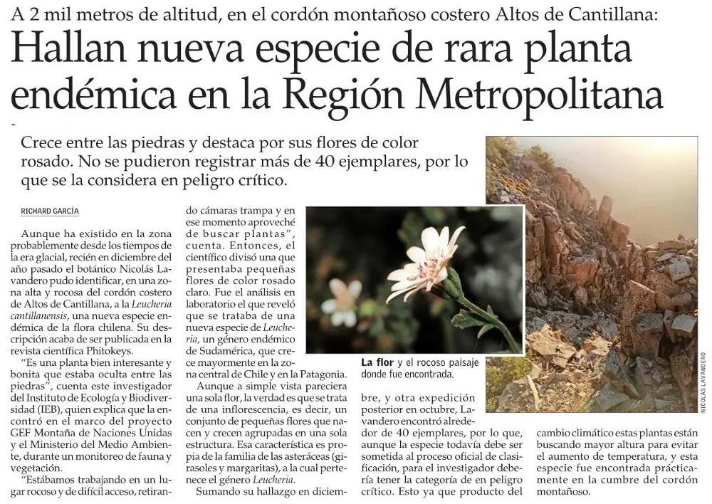 Hallan nueva especie de rara planta endémica en la Región Metropolitana
