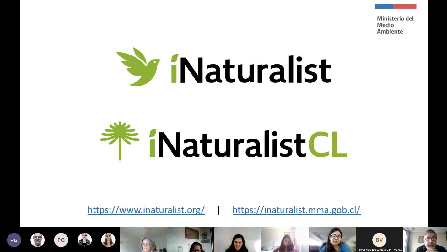 Ciencia ciudadana y la aplicación iNaturalistCL