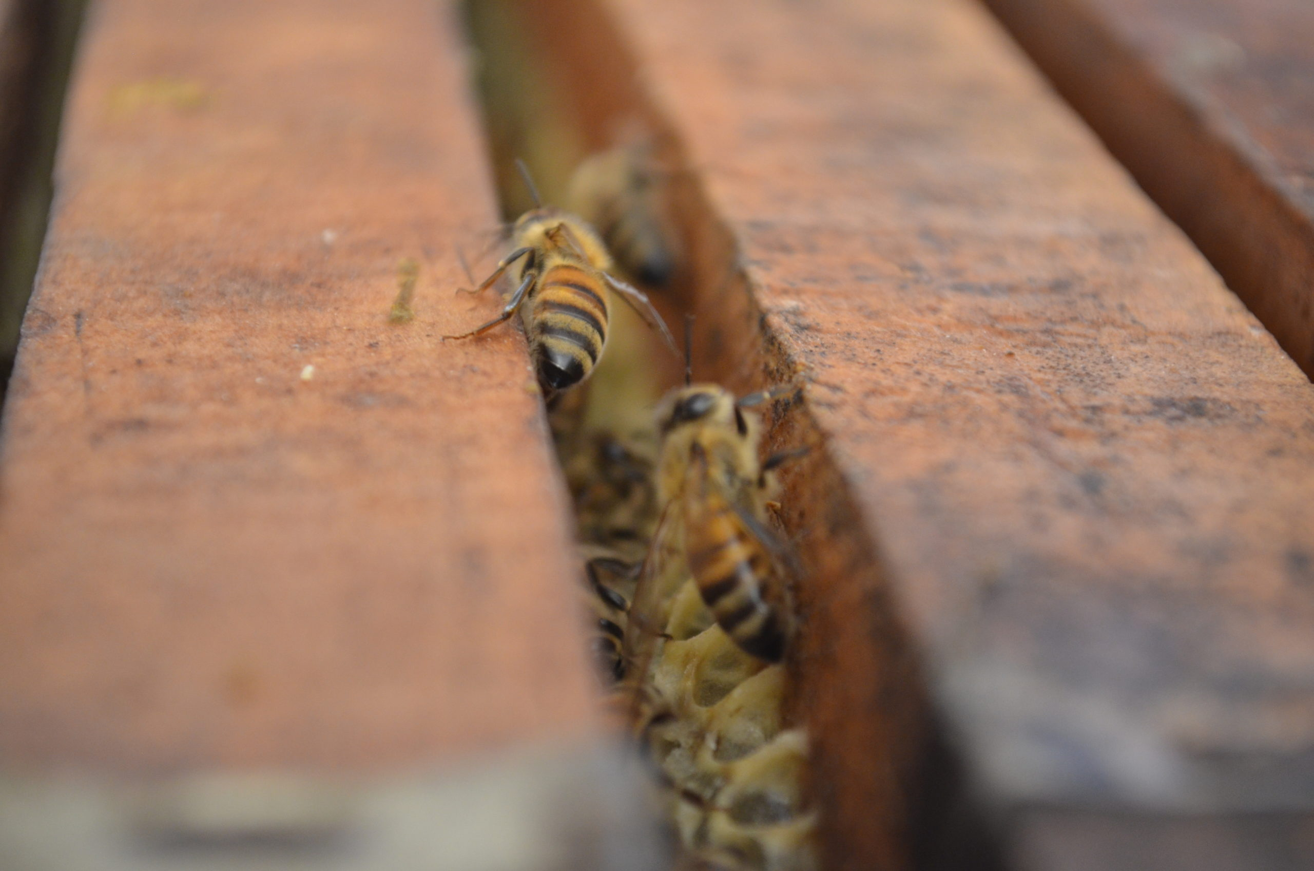Se conforma con éxito la primera cooperativa exclusiva de apicultores orgánicos de Chile