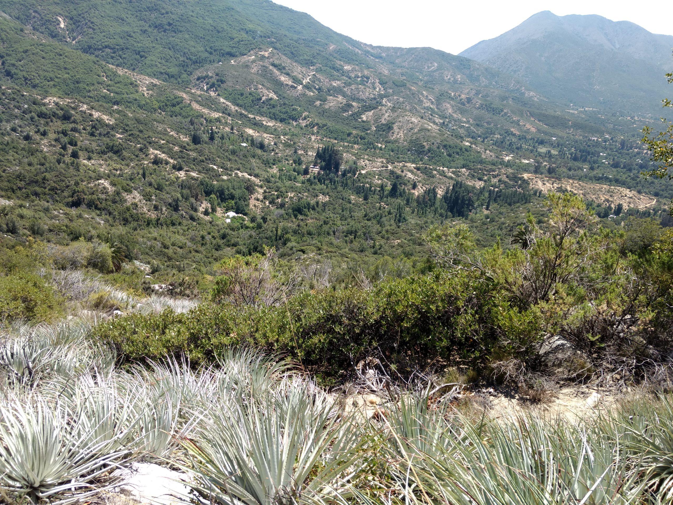422.162 hectáreas forman una red de áreas de alto valor en biodiversidad de la Zona Central de Chile
