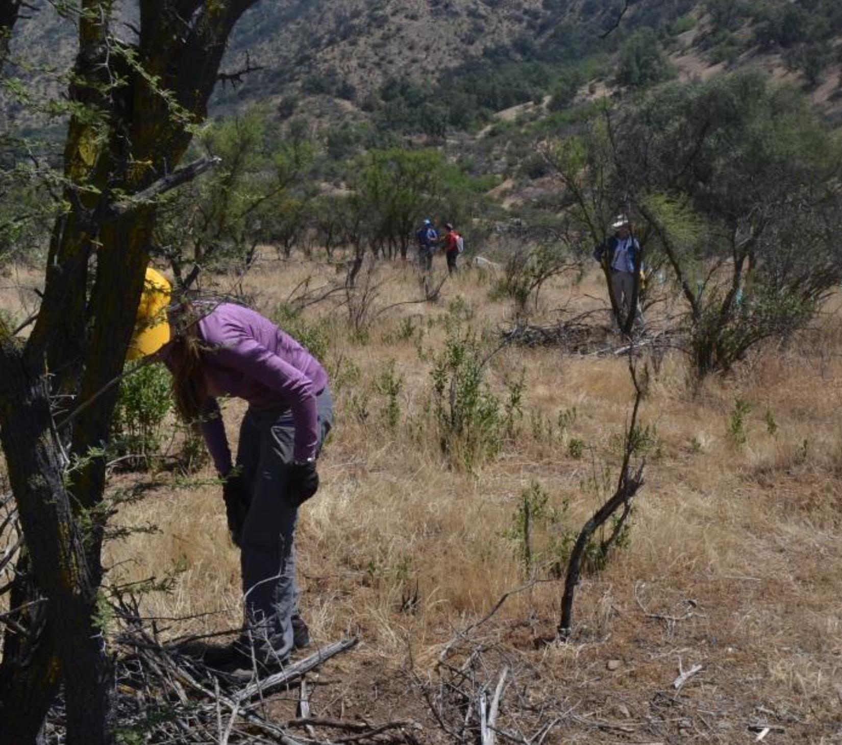 Proyecto de restauración busca recuperar Santuario de la Naturaleza Quebrada de La Plata afectado por incendio